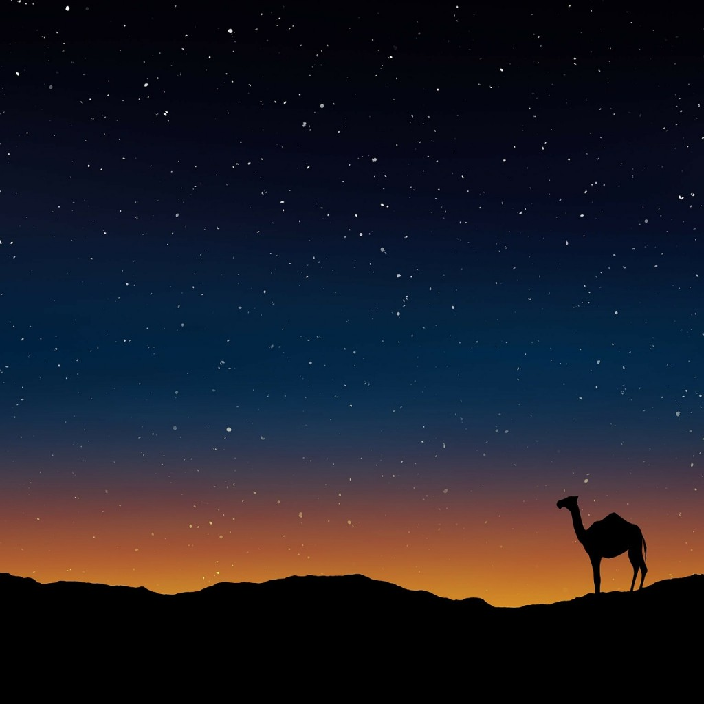 Camel at sunset. Public domain photo.