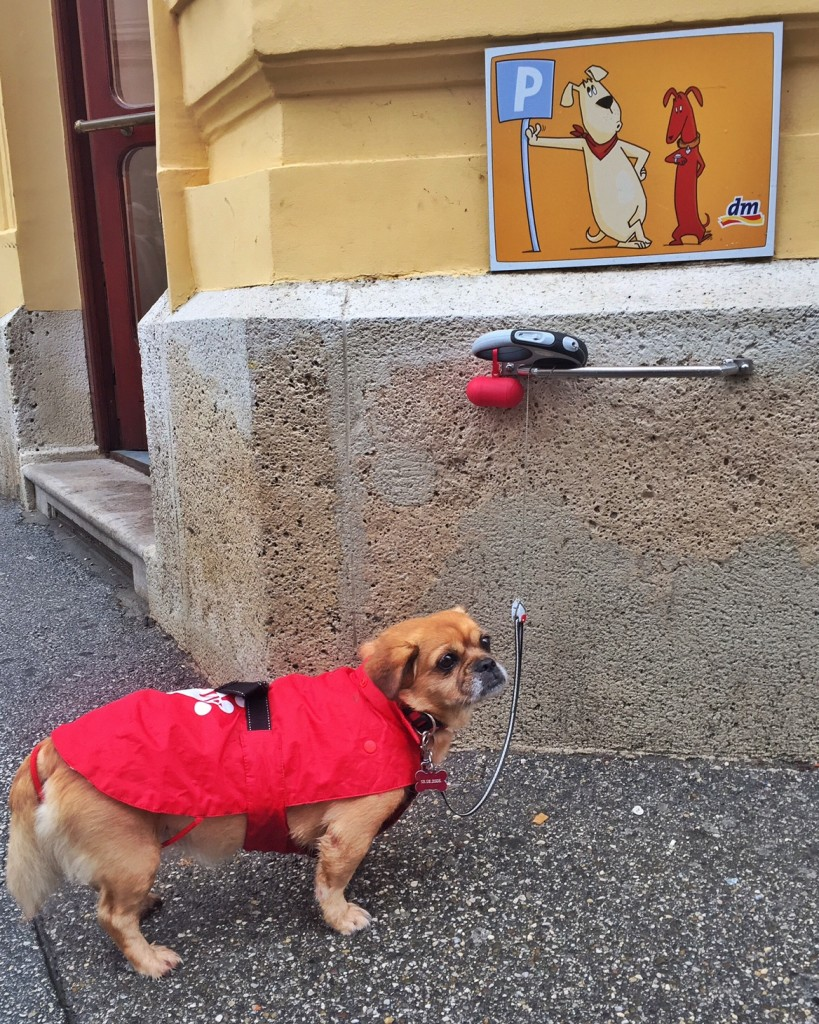 "Sometimes you just gotta hang out and chill, like this little doggy in Zagreb's adorable ""doggy parking spots""."