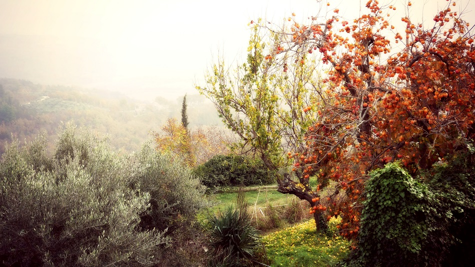 Istria in the off-season. Without being ready to risk off-season travel, you'll just see the same green nature all the time.