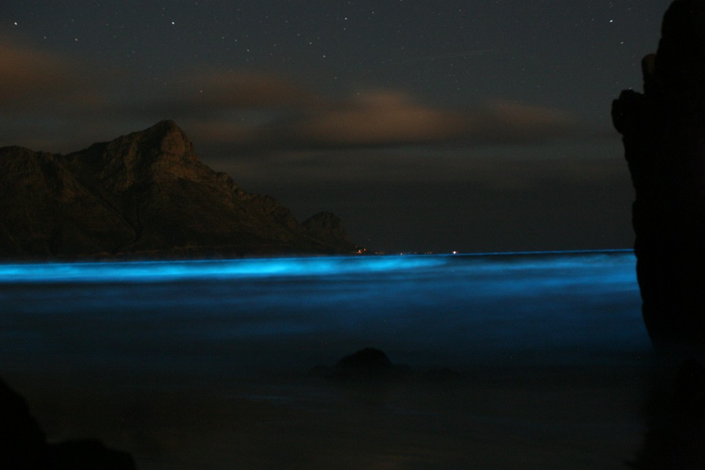 "Bruce Anderson's photo submitted to the BMC Ecology competition in 2012, who share the photo with this explanation: ""Blue Tide. Seasonal winds can cause the upwelling of nutrients which in turn can cause plankton populations to bloom as ""red tides."" Here, a dinoflagellate population (Noctiluca sp.) turns the ocean a luminous blue colour as the disturbance by the wind triggers a light-generating chemical reaction. The production of light is thought to attract fish predators that prey on potential predators of the dinoflagellates."""